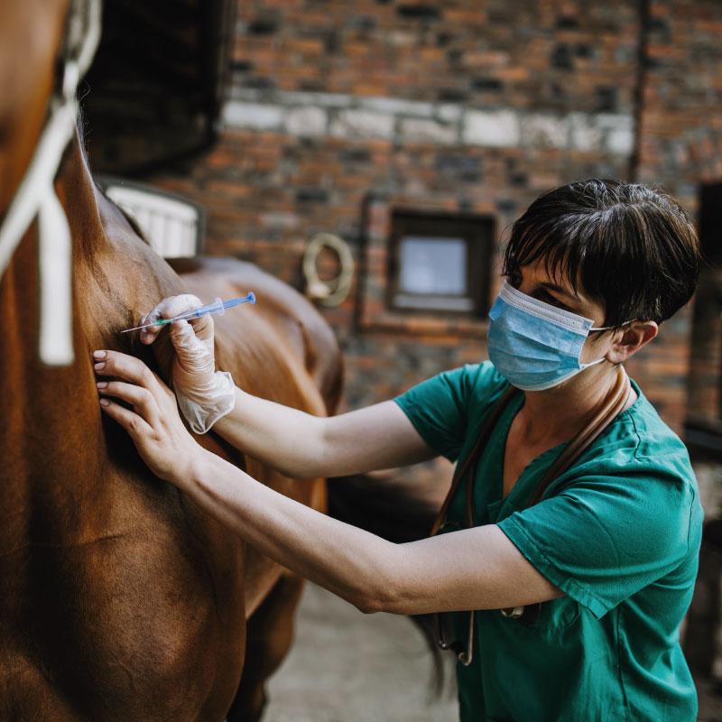 Cavallo e veterinario